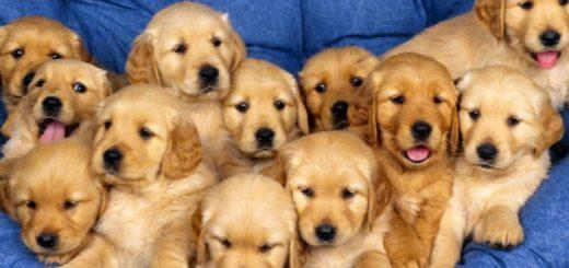 evde köpek bakımı, köpek bakımı, köpekler